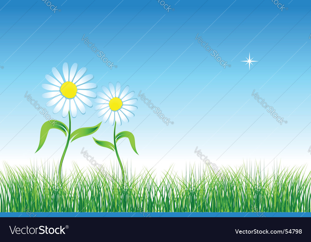 Chamomile on green field vector | Price: 1 Credit (USD $1)