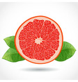 Fresh ripe piece of grapefruit isolated on white vector