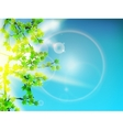 Green leaves background and sun vector