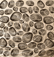Shells background vector