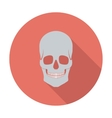 Anotomy skull vector