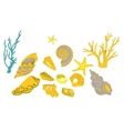 Collection of colorful sea shells  stars vector
