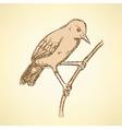 Sketch rufous hornero bird in vintage style vector