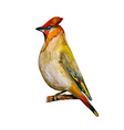 Watercolor painting bird vector