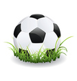 Soccer ball with grass vector