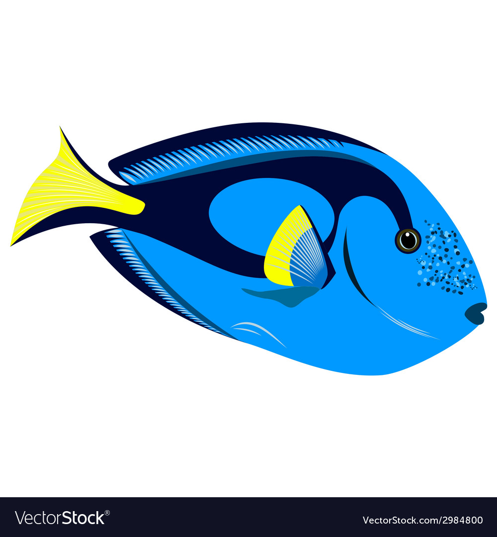 Colourful tropical fish isolated on white vector | Price: 1 Credit (USD $1)