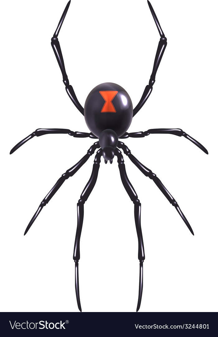 Realistic spider isolated vector | Price: 1 Credit (USD $1)