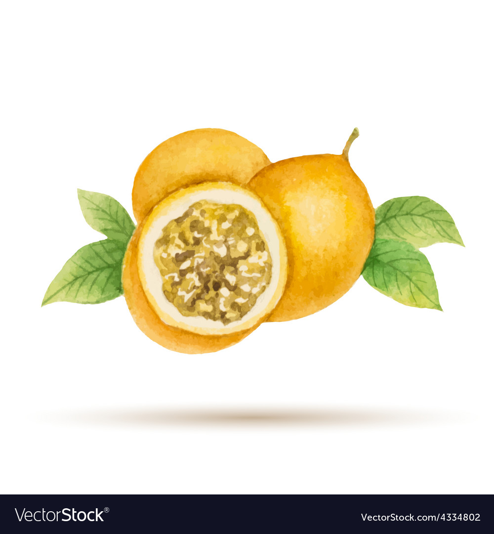 Passion fruit vector | Price: 1 Credit (USD $1)