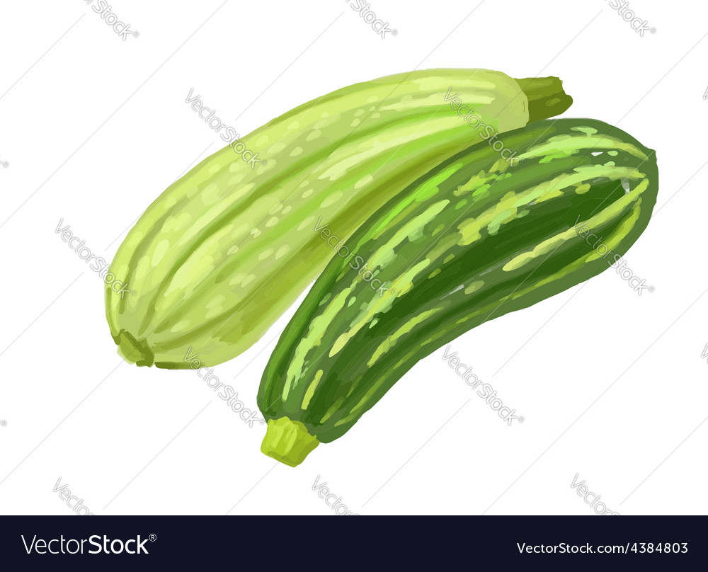 Picture of two zucchini vector | Price: 1 Credit (USD $1)