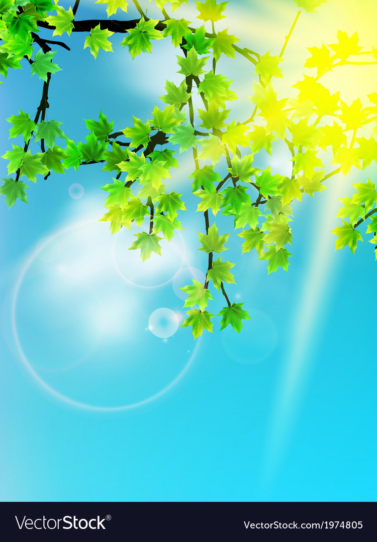 Sun beams and green leaves vector | Price: 1 Credit (USD $1)