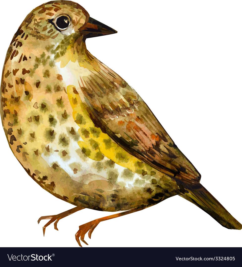 Watercolor painting bird vector   Price: 1 Credit (USD $1)