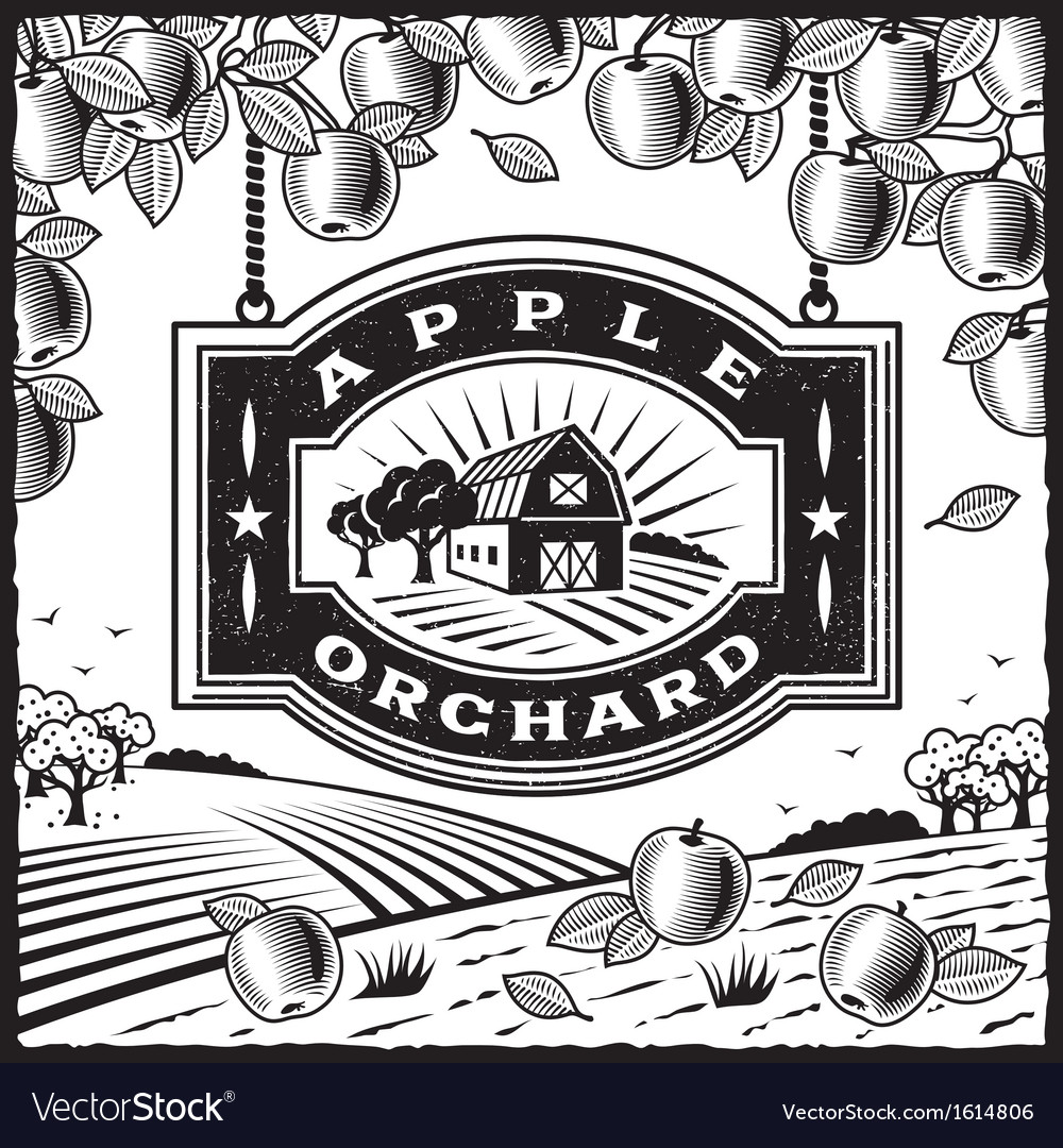 Apple orchard black and white vector