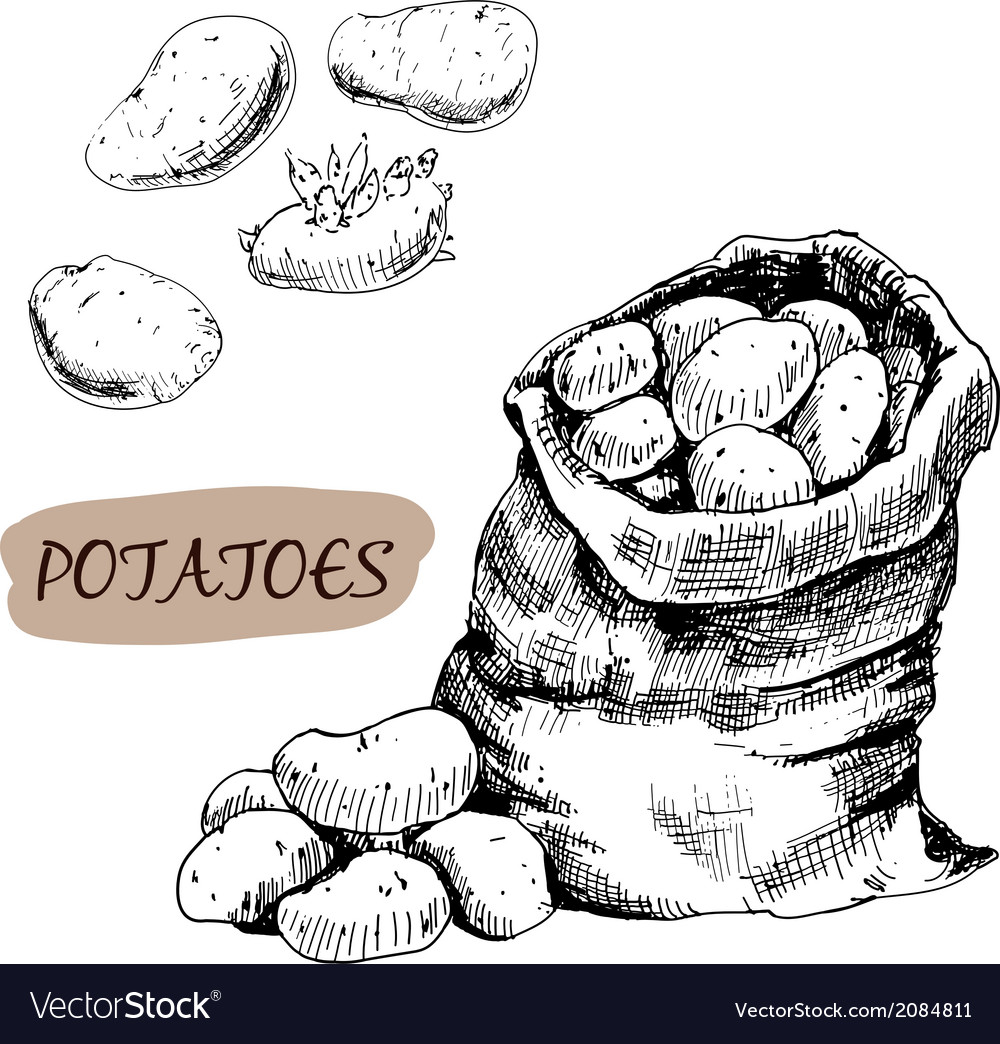 Potatos vector | Price: 1 Credit (USD $1)