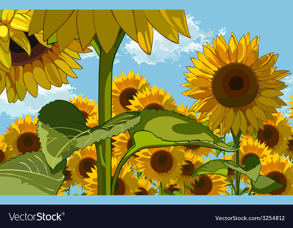 Field of flowers of sunflowers vector | Price: 1 Credit (USD $1)