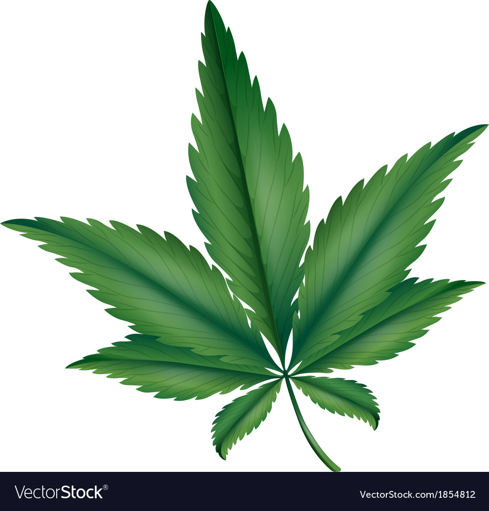 Marijuana vector | Price: 1 Credit (USD $1)