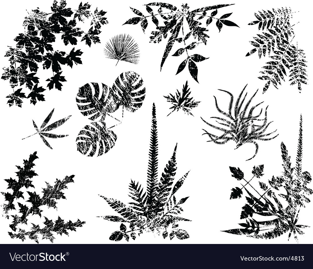 Grunge plant elements vector | Price: 1 Credit (USD $1)