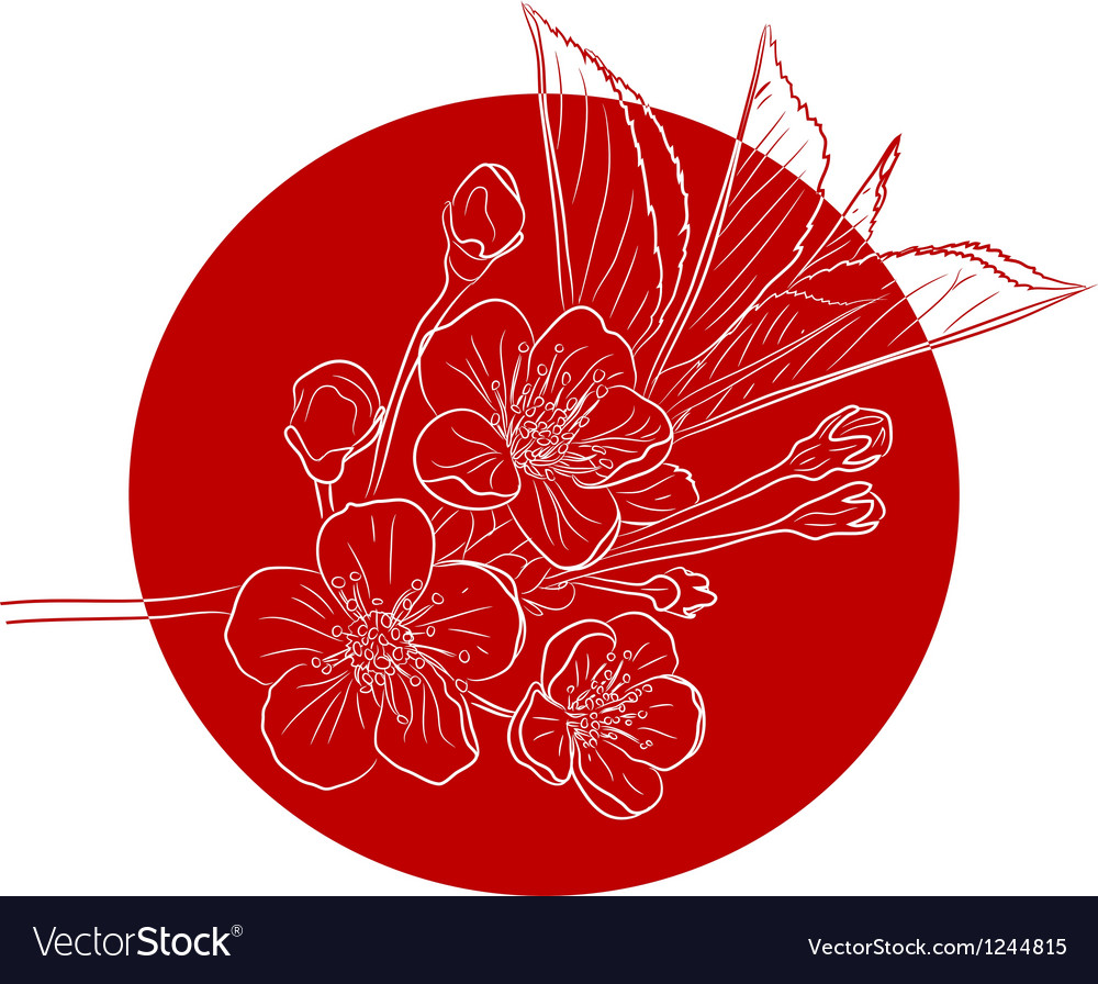 Blossoming cherry tree vector   Price: 1 Credit (USD $1)