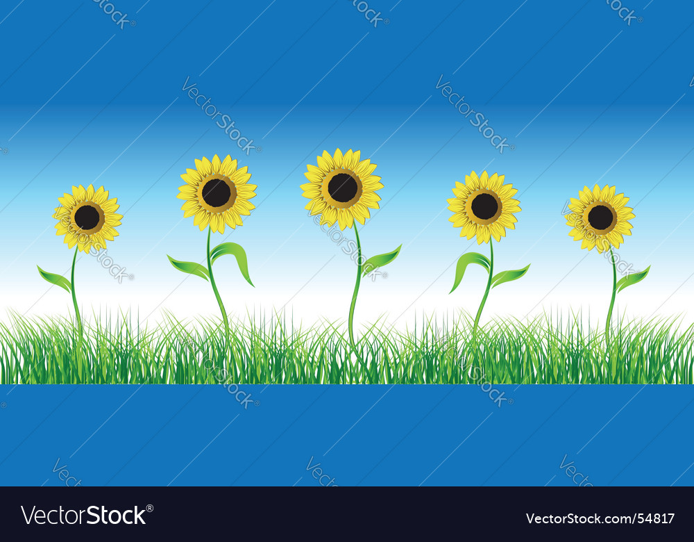 Sunflower on green field vector | Price: 1 Credit (USD $1)