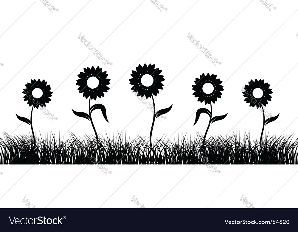 Sunflower on field black silhouette vector | Price: 1 Credit (USD $1)