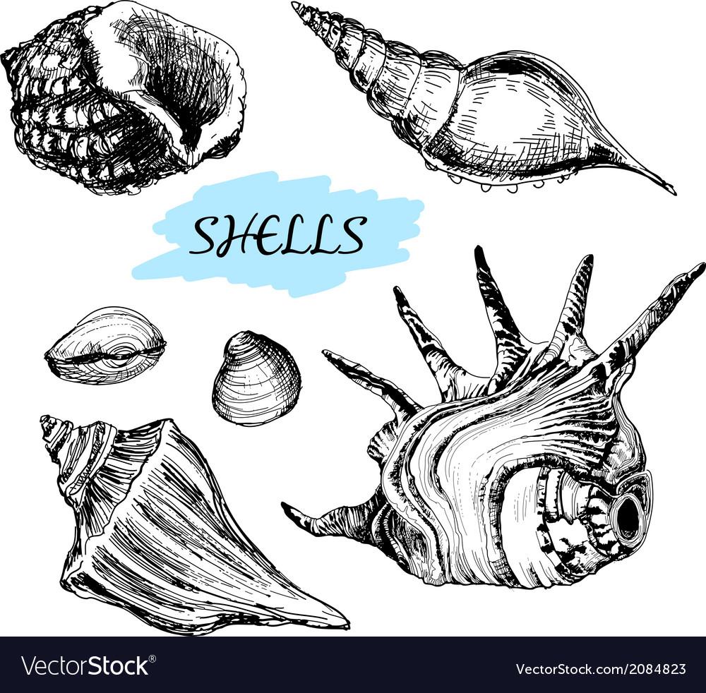 Seashells vector | Price: 1 Credit (USD $1)