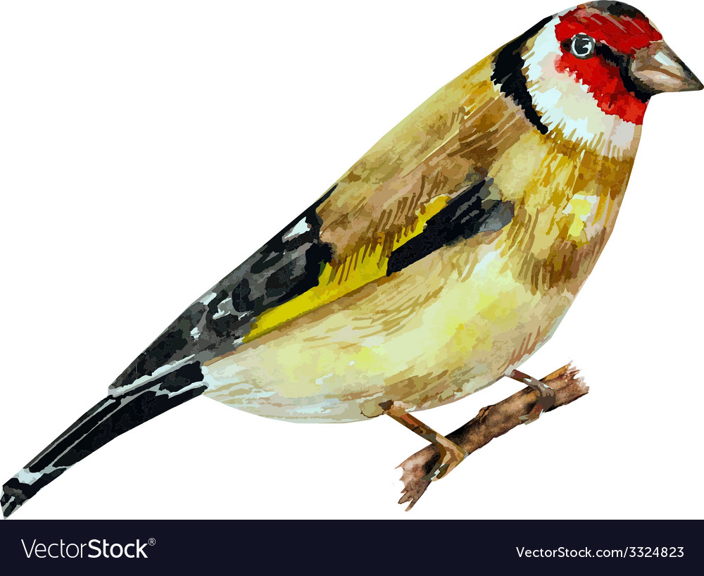 Watercolor painting bird on branch vector | Price: 1 Credit (USD $1)
