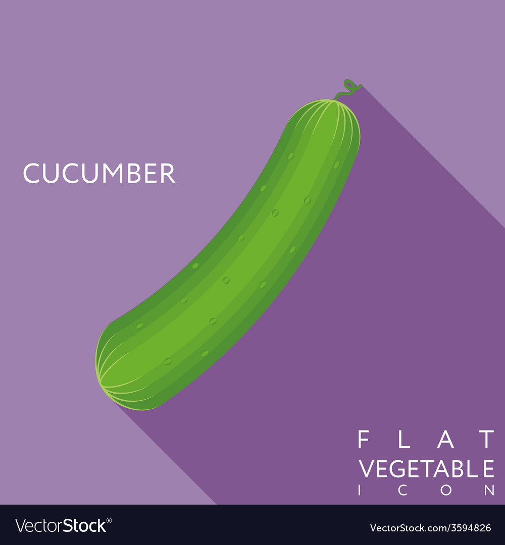 Cucumber flat icon with long shadow vector | Price: 1 Credit (USD $1)