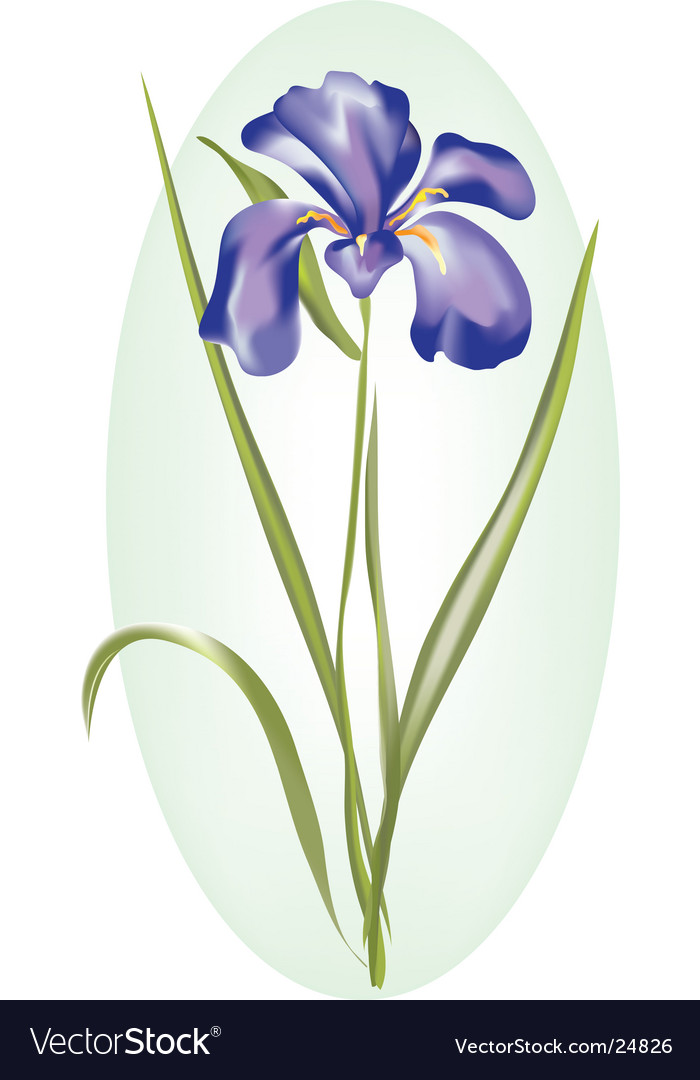 Dutch iris vector | Price: 1 Credit (USD $1)