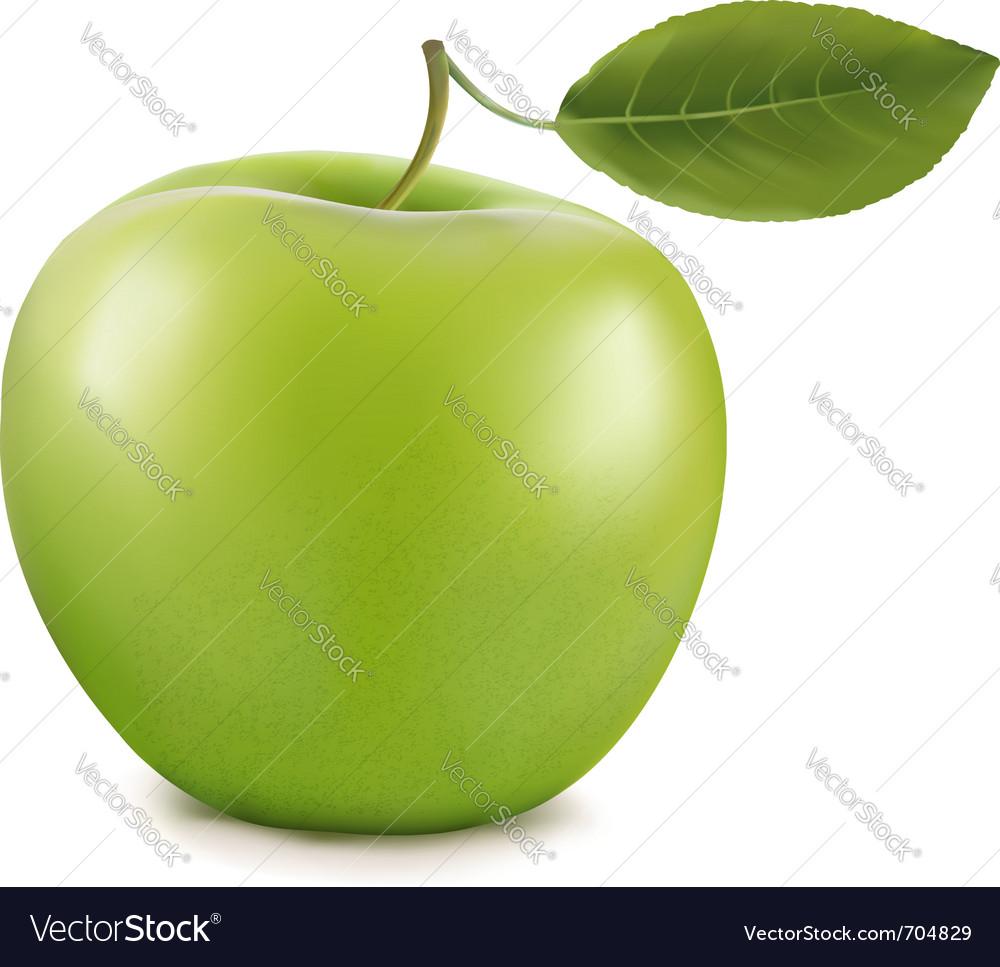 Green apple vector | Price: 1 Credit (USD $1)