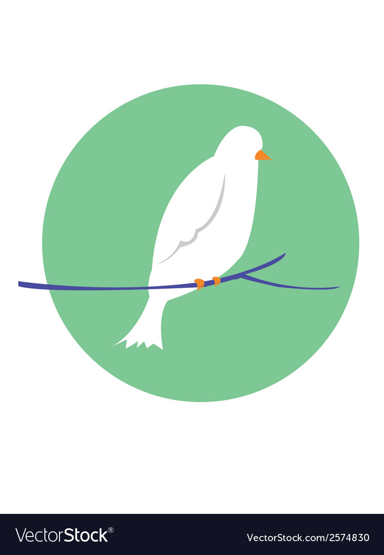 Pigeon vector | Price: 1 Credit (USD $1)