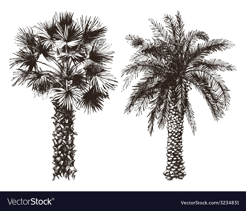 Hand drawn palm trees vector | Price: 1 Credit (USD $1)