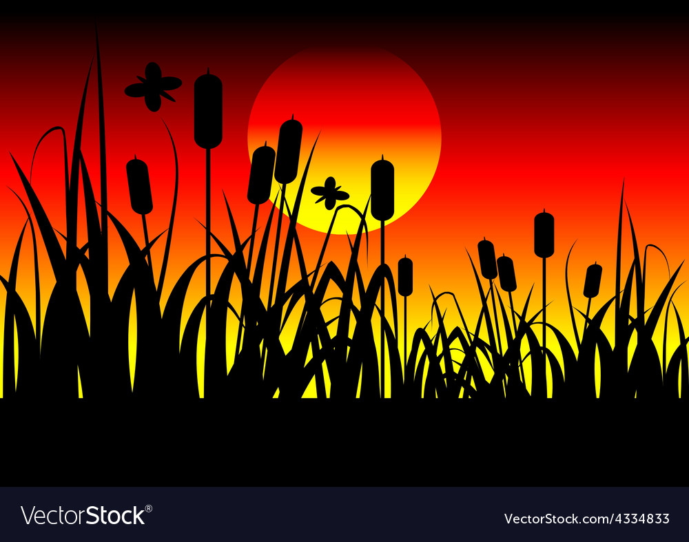 Field and sunset vector