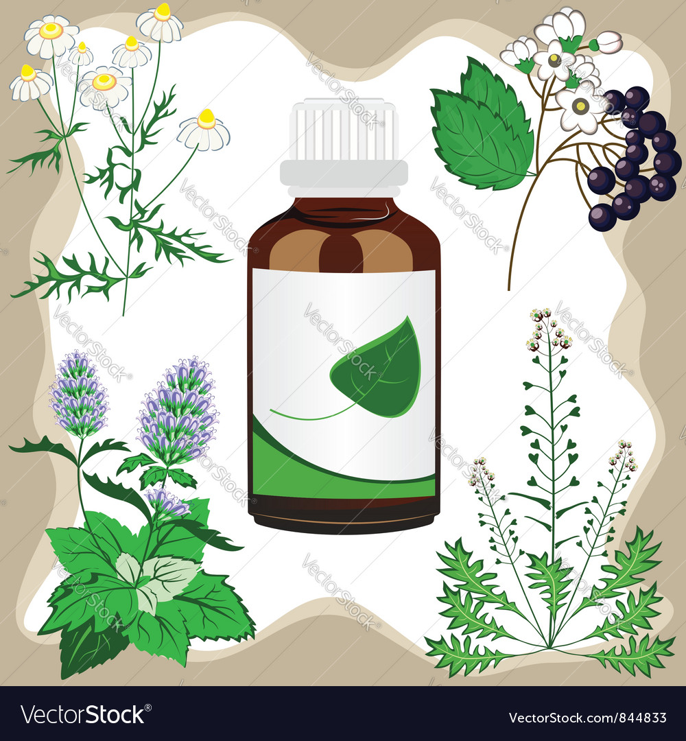 Medicinal herbs with bottle vector | Price: 1 Credit (USD $1)