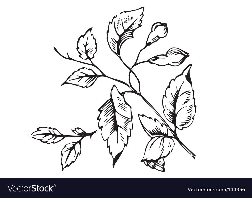 Antique foliage engraving vector | Price: 1 Credit (USD $1)