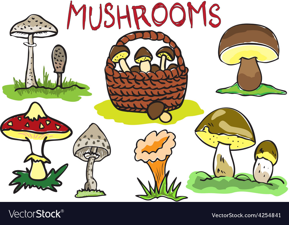 Several kinds of mushrooms vector | Price: 1 Credit (USD $1)