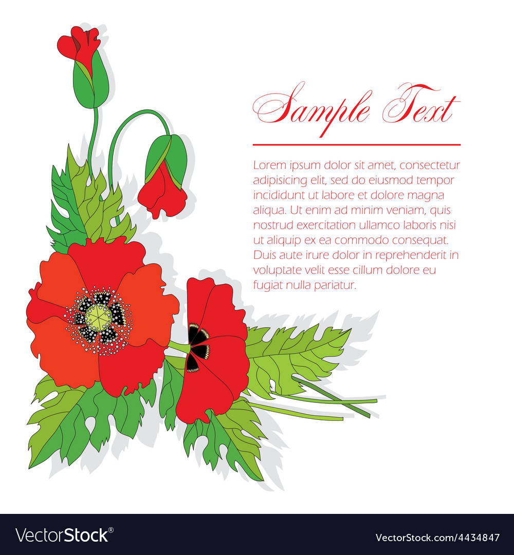 Bouquet of poppies vector | Price: 1 Credit (USD $1)