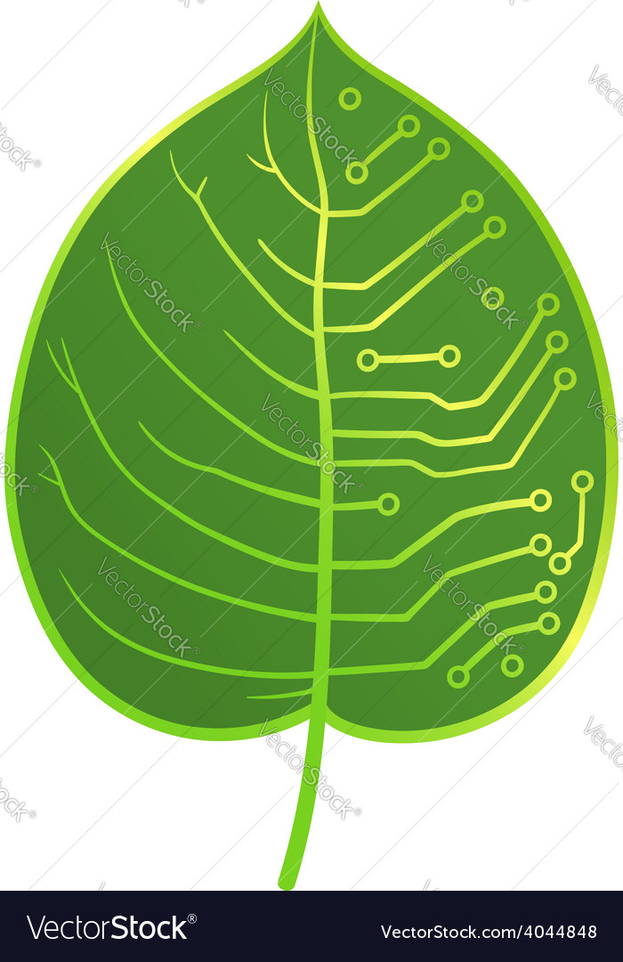 Leaf microcircuit vector | Price: 1 Credit (USD $1)