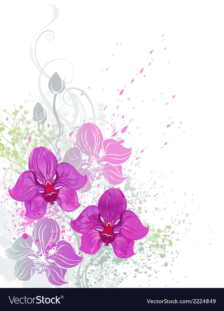 Pink orchid vector | Price: 1 Credit (USD $1)
