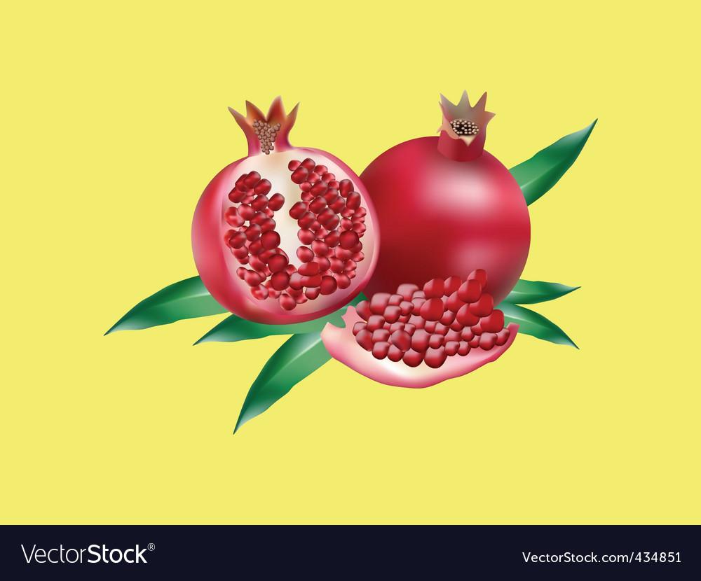 Pomegranate background vector | Price: 1 Credit (USD $1)