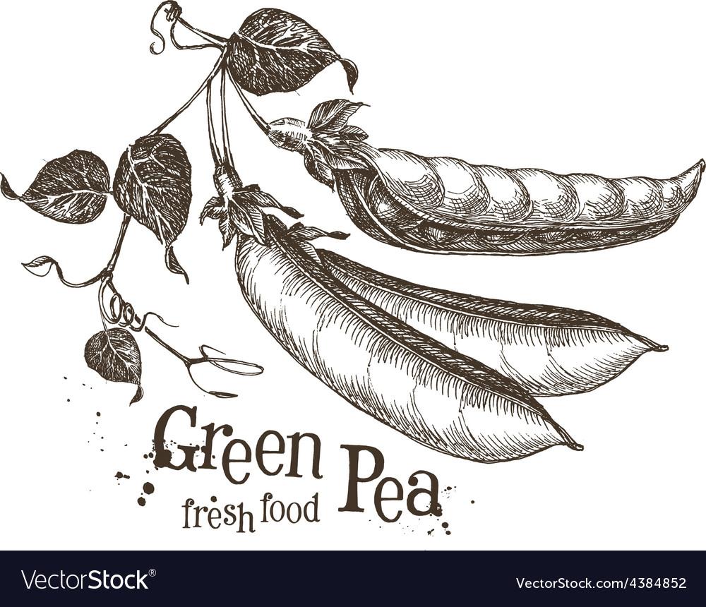 Peas logo design template fresh vegetables vector | Price: 3 Credit (USD $3)