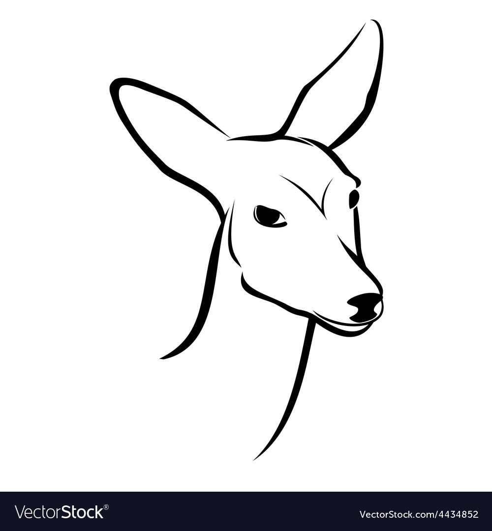 Roe head vector