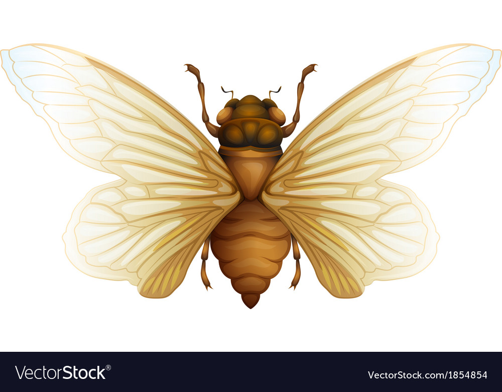 Generic cicada vector | Price: 1 Credit (USD $1)