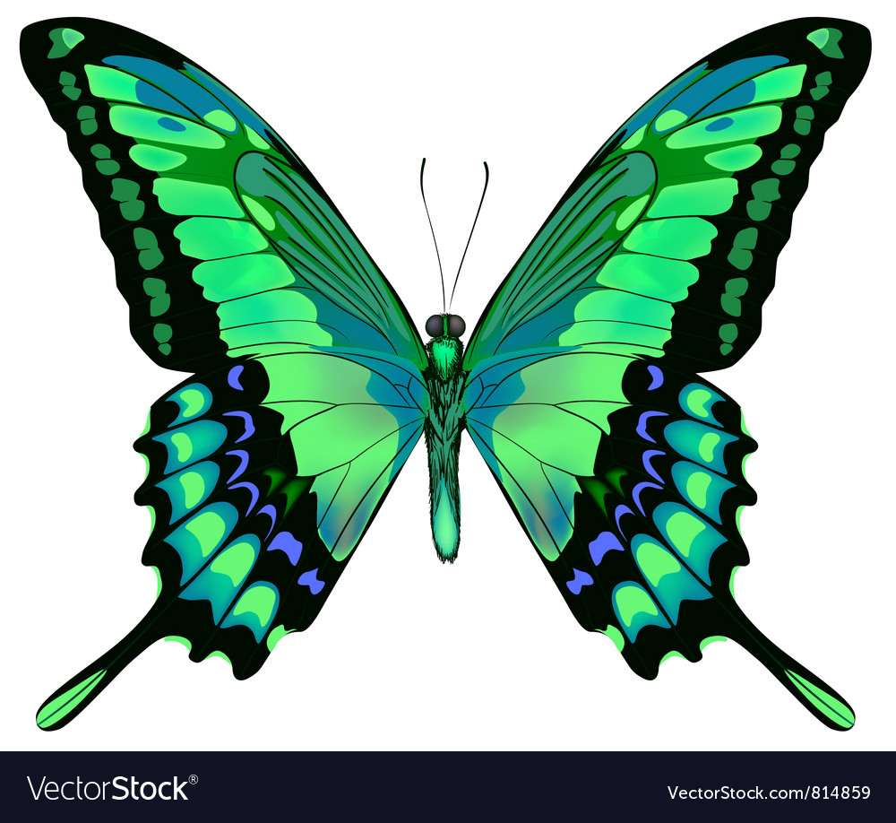 Beautiful butterfly vector | Price: 1 Credit (USD $1)