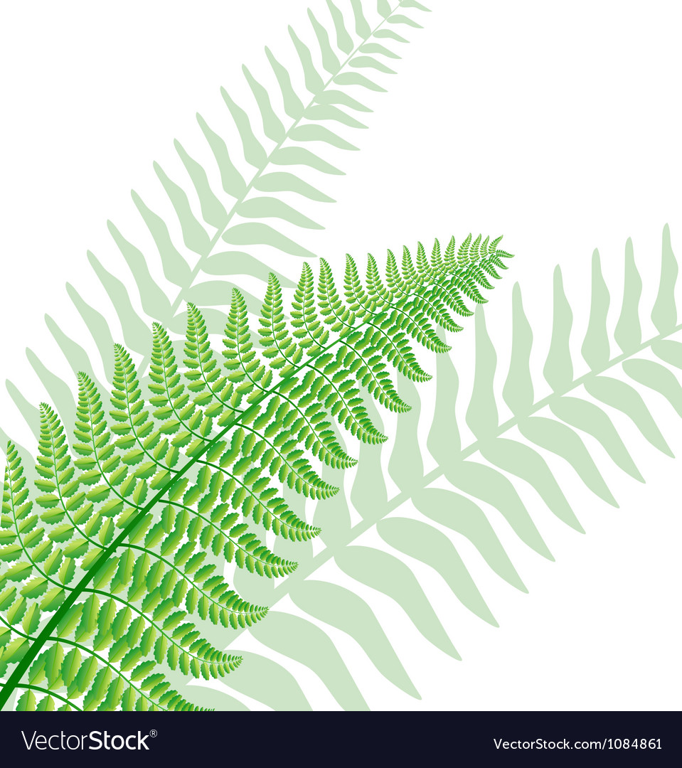 Fern leaf vector | Price: 1 Credit (USD $1)