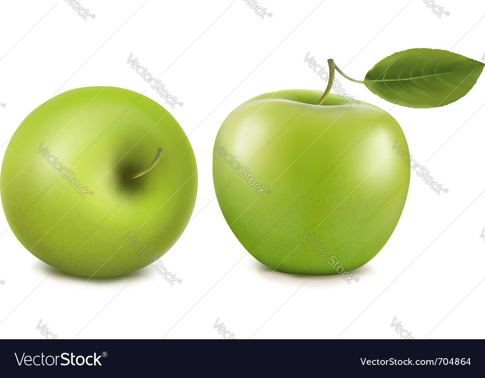 Fresh green apples vector | Price: 1 Credit (USD $1)