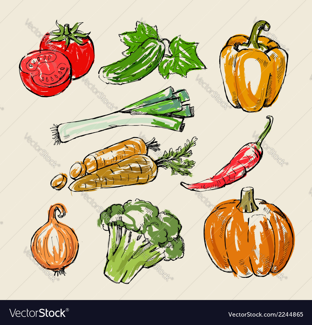 Color vegetables vector | Price: 1 Credit (USD $1)