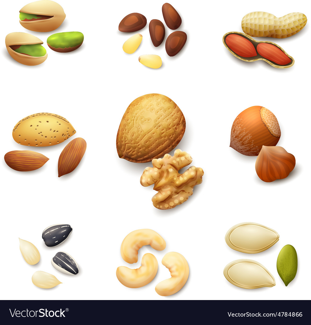 Nuts realistic set vector