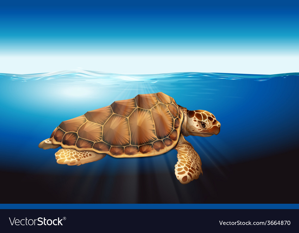 A sea turtle vector | Price: 1 Credit (USD $1)
