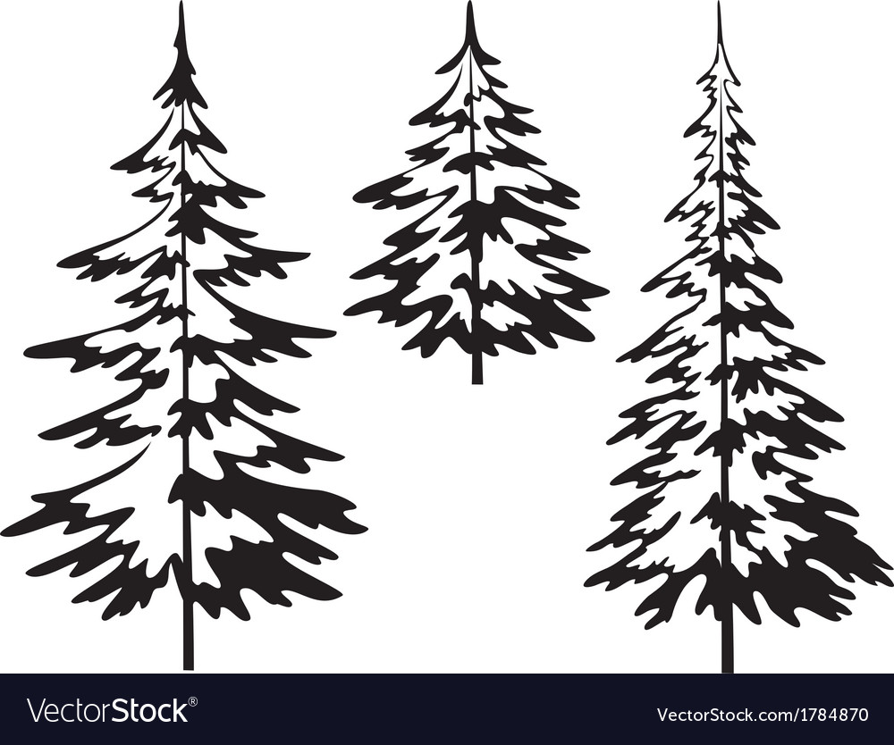 Christmas fir tree contours vector | Price: 1 Credit (USD $1)