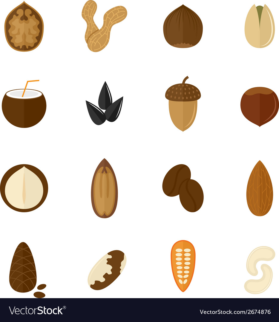 Set of nuts icons vector | Price: 1 Credit (USD $1)
