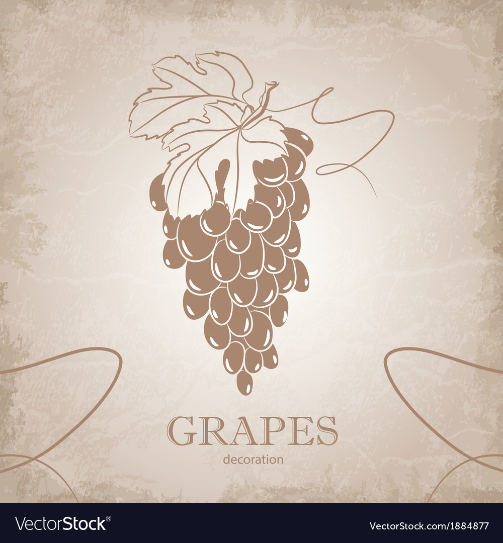 Hand drawn of grapes vector   Price: 1 Credit (USD $1)